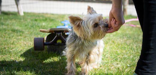 Every Dog Needs Some Kind of Training.